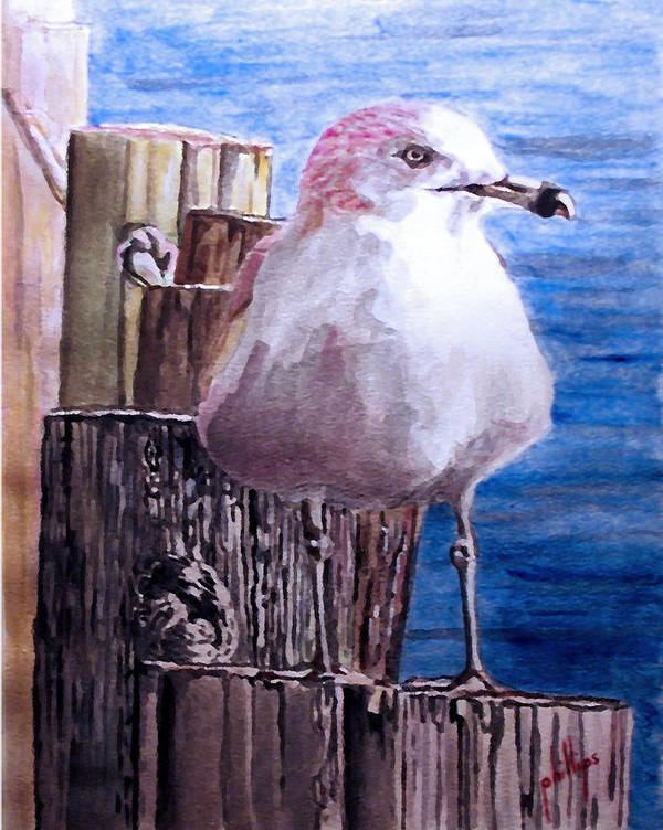 Seagull Poster featuring the painting My Gull by Jim Phillips