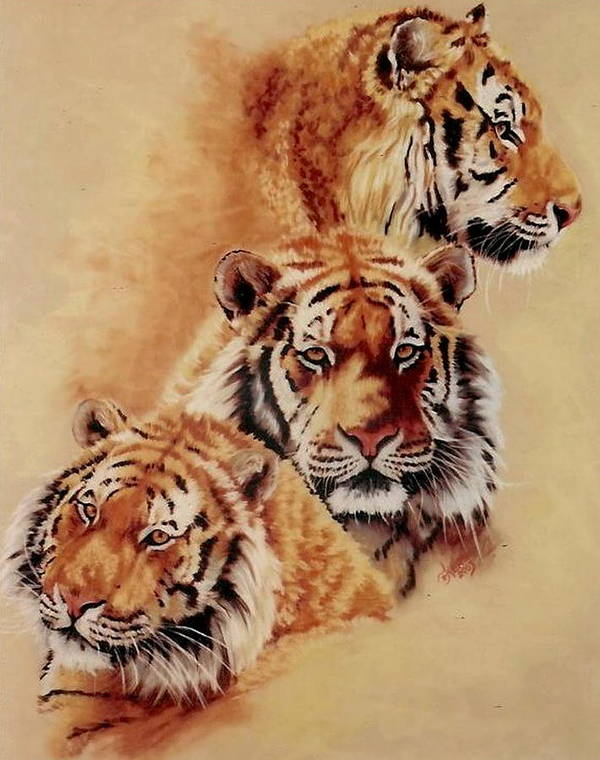Tiger Poster featuring the pastel Nanook by Barbara Keith