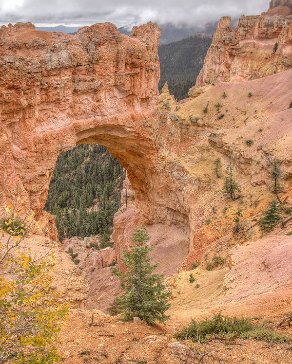 National Parks Poster featuring the photograph Natural Bridge - Vertical by Kristina Rinell