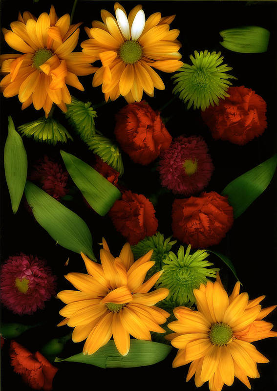 Gerbera Daisies Poster featuring the photograph Nature's Song by Bonnie Bruno