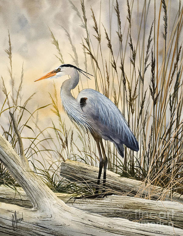 Heron Fine Art Prints Poster featuring the painting Nature's Wonder by James Williamson