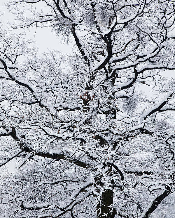 Winter Poster featuring the photograph Nerves by Gabriela Insuratelu