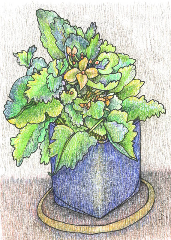 Potted Plant Poster featuring the painting Nice Plant by Rose Gauss