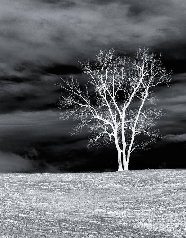 Tree Poster featuring the photograph Night Sky by Kathy Jennings