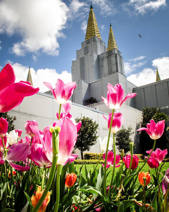 Oakland Temple Photography Poster featuring the photograph Oakland Pink Tulips by La Rae Roberts