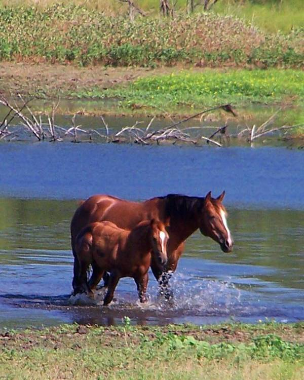 Horses Poster featuring the photograph Okay Time To Go. by Lilly King