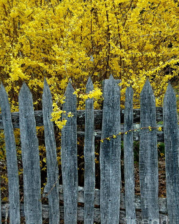 Farm Fence Poster featuring the photograph Old Fence by Bernd Billmayer