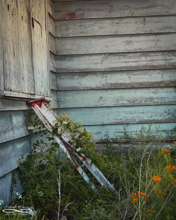 Abandoned Poster featuring the photograph Old Ladder by Chris Daugherty