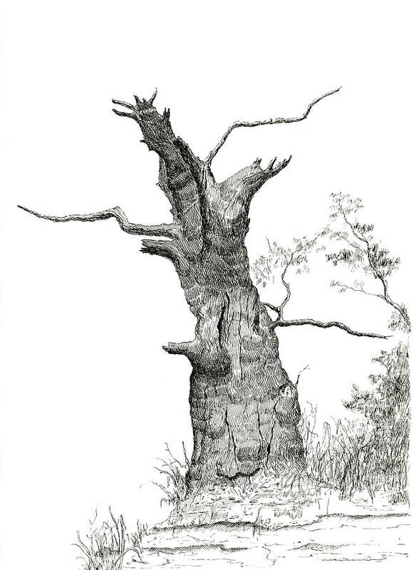 Old Poster featuring the drawing Old Oak by Jeno Futo