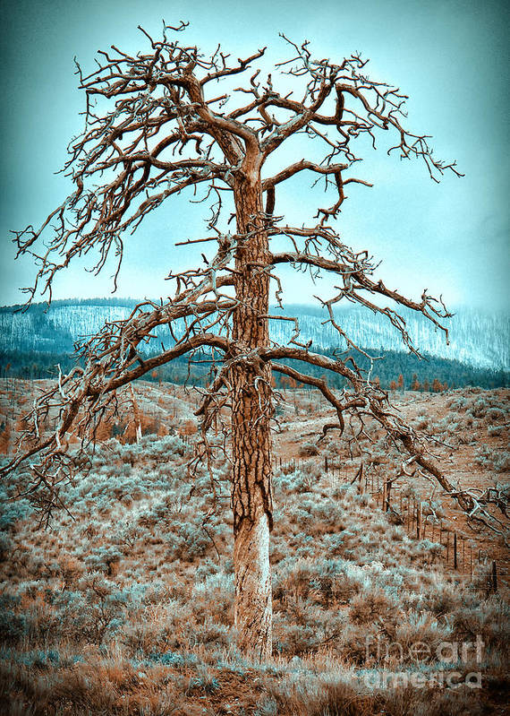 Tree Poster featuring the photograph Old Tree by Naman Imagery