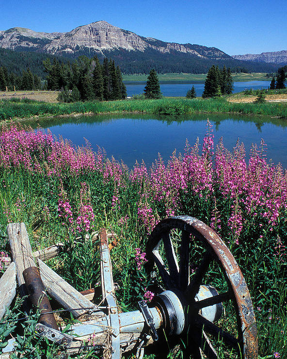 Old Wheels Poster featuring the photograph Old Wheel And Brooks Lake by Kathy Yates