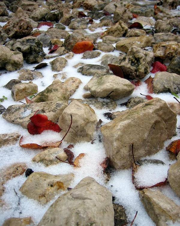 Red Autumn Leaves Poster featuring the photograph On The Rocks by Lindsey Orlando