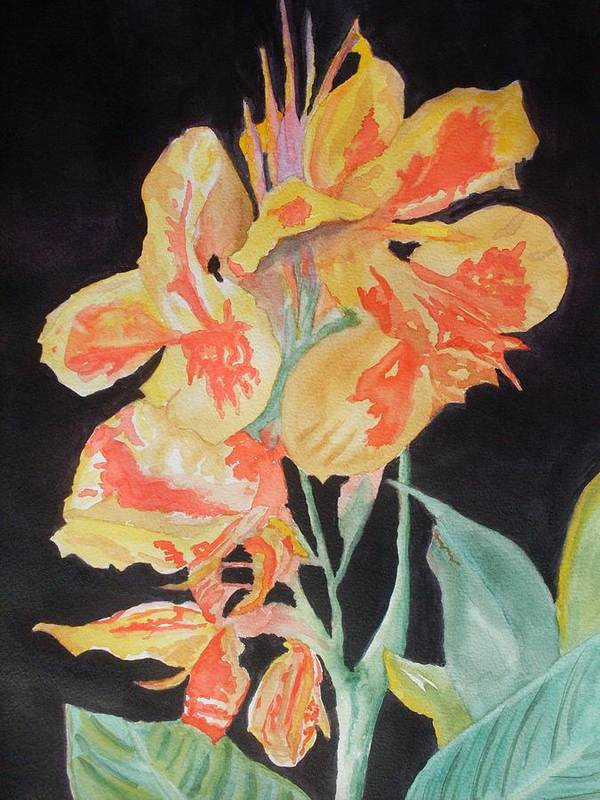 Orange Poster featuring the painting Orange And Yellow Canna Lily On Black by Warren Thompson