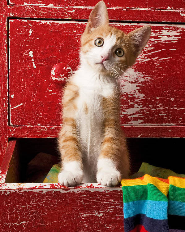Kitten Poster featuring the photograph Orange Tabby Kitten In Red Drawer by Garry Gay
