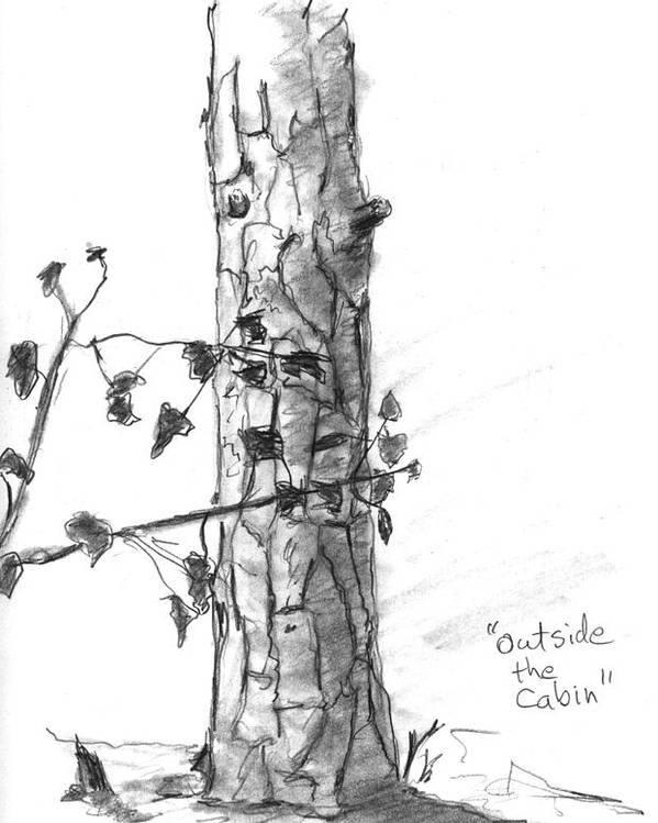 Tree Poster featuring the drawing Outside The Cabin by Kevin Callahan