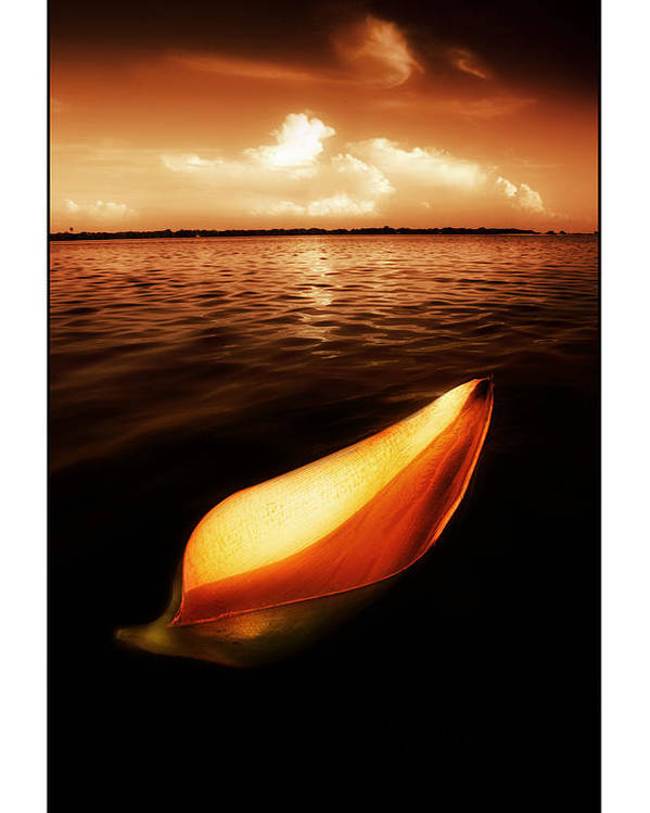 Palm Poster featuring the photograph Palm Leaf Sheath Boat by Mal Bray