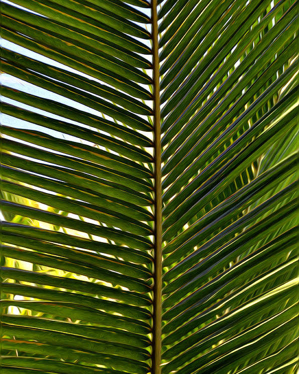 Palm Poster featuring the painting Palm Leaves by Tom Bell