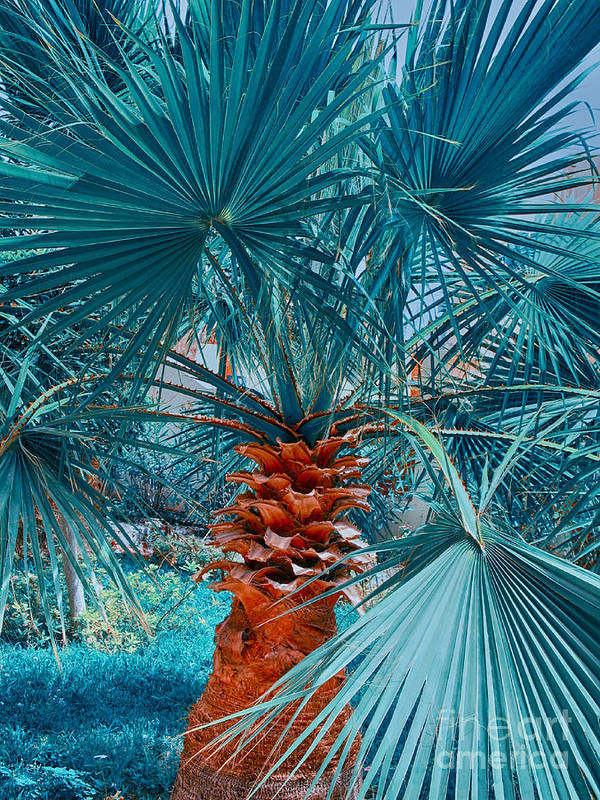 Palm Poster featuring the photograph Palm Tree by Jirka Svetlik