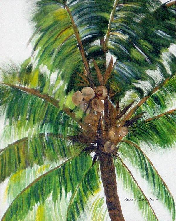 Common Beach Palm Tree Poster featuring the painting Palma Tropical by Maritza Bermudez