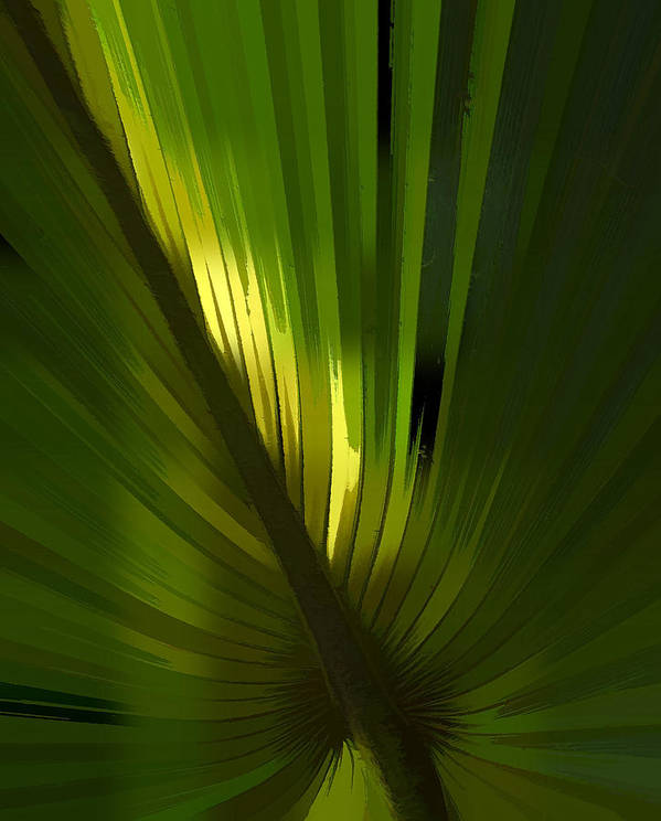 Booker Creek Poster featuring the photograph Palmetto Embrace by Marvin Spates