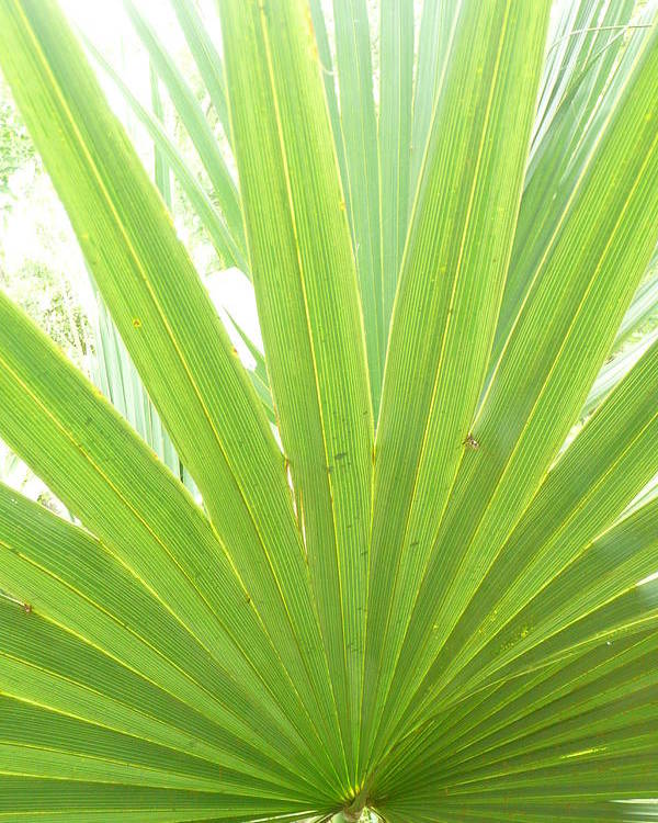 Green Poster featuring the photograph Palmetto by Kathy Schumann