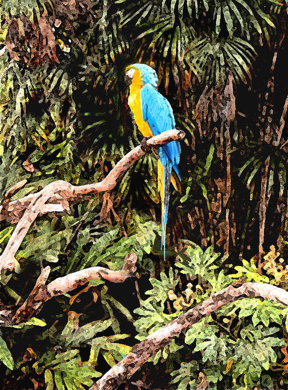 Parrot Poster featuring the photograph Parrot by Steve Karol