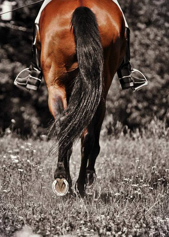 Horse Poster featuring the photograph Pasture Practice by JAMART Photography
