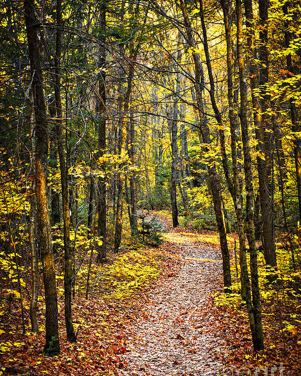 Trees Poster featuring the photograph Path In Fall Forest by Elena Elisseeva