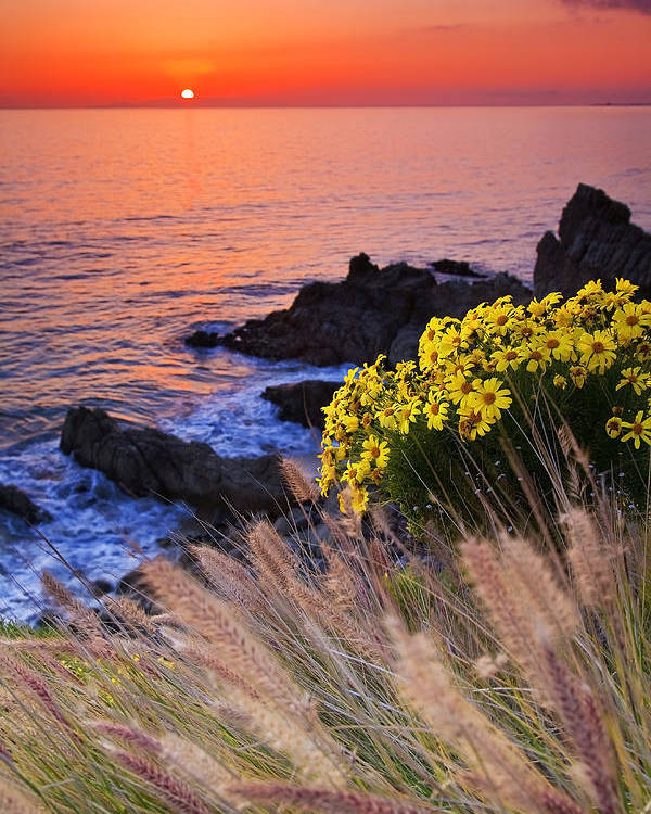 Beaches Poster featuring the photograph Pch Sunset by Greg Clure