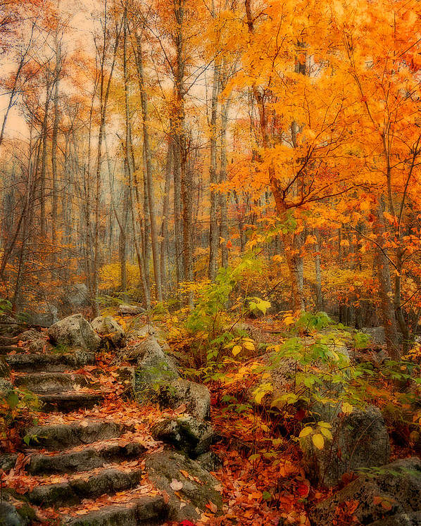 Fall Poster featuring the photograph Peaceful Pathway by Kathy Jennings