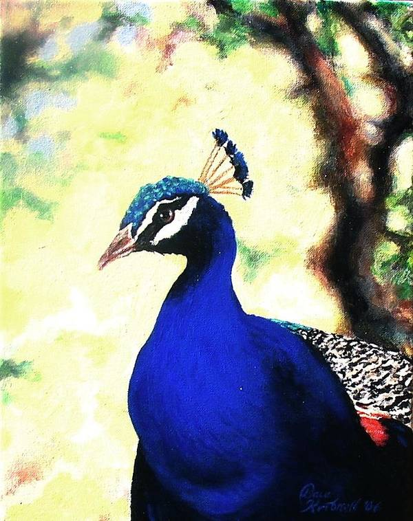 Peacock Poster featuring the painting Peacock by Dave Kimbrell