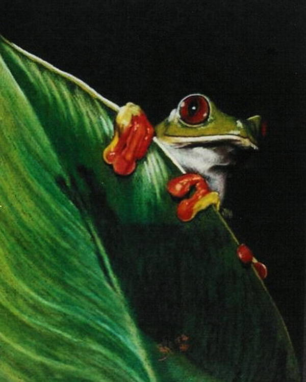 Frog Poster featuring the drawing Peek-a-boo by Barbara Keith
