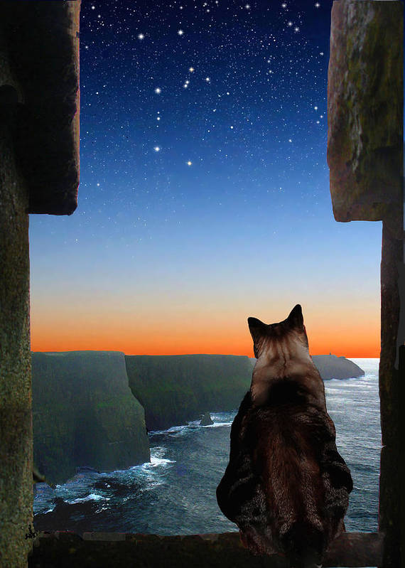 Constellations Poster featuring the photograph Pegasus Over The Cliffs Of Moher by Kathleen Horner