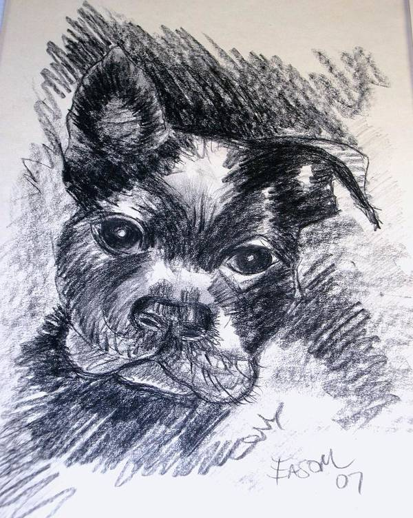 Dog Poster featuring the drawing Pepper by Scott Easom
