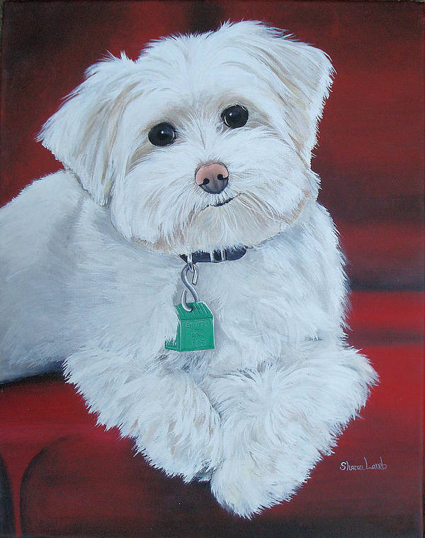 Maltese Dog Pet Portrait Commission Animlas Cats Horses Houses Homes Art Landscapes Poster featuring the painting Pet Portrait Painting Commission Maltese Dog by Sharon Lamb