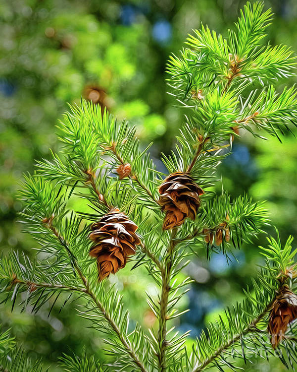 Green Poster featuring the digital art Pinecones by Mellissa Ray