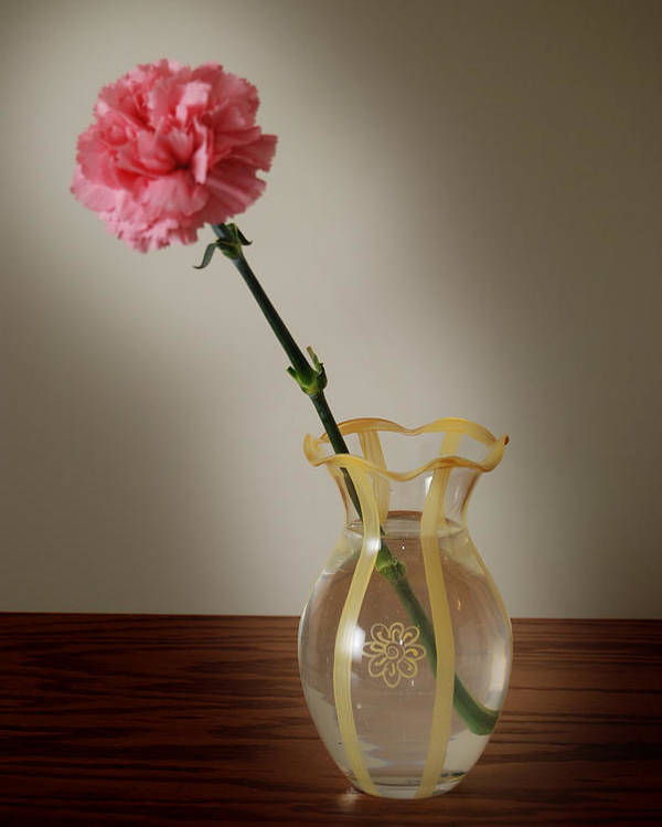 Flower Poster featuring the photograph Pink Carnation by Dave Chafin
