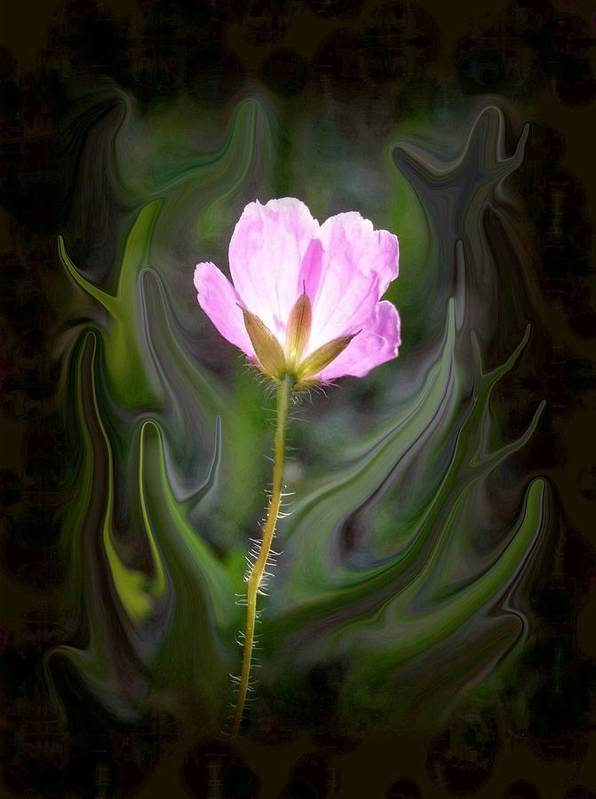 Pink Flower Poster featuring the photograph Pink Flower by Jim Darnall
