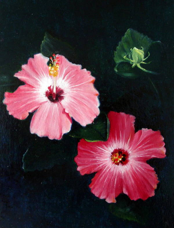Oil Poster featuring the painting Pink Hibiscus by Bonnie Haversat