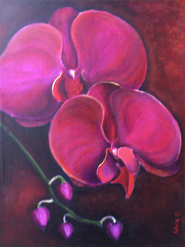 Orchid Poster featuring the painting Pink Orchid by Silvia Philippsohn
