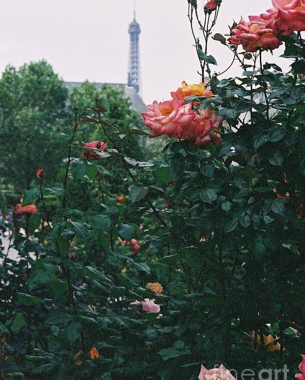 Roses Poster featuring the photograph Pink Roses And The Eiffel Tower by Nadine Rippelmeyer