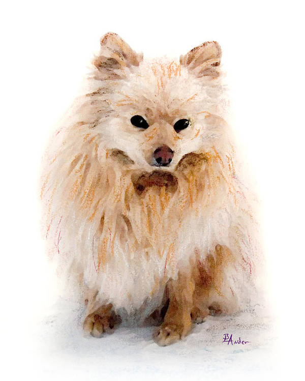 Pomeranian Poster featuring the pastel Pip by Brent Ander