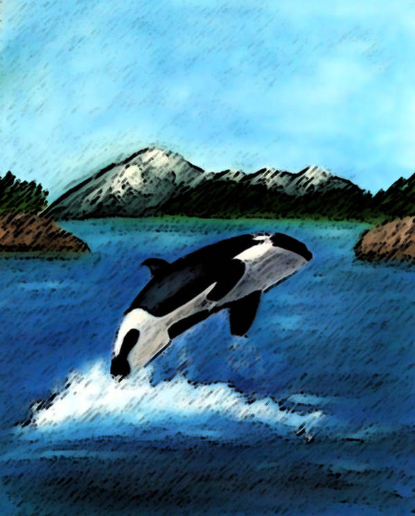 Orca Poster featuring the digital art Playful Orca by Mary Gaines