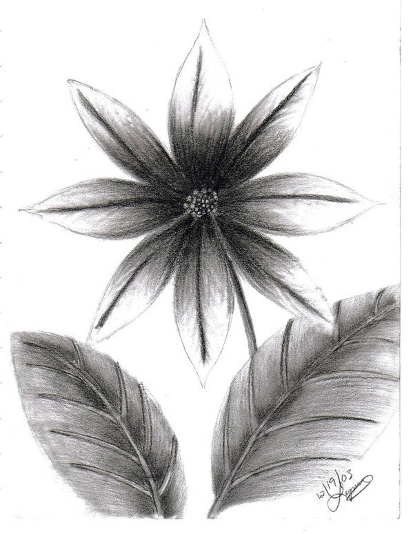 Poster featuring the drawing Poinsettia by Lynnette Jones