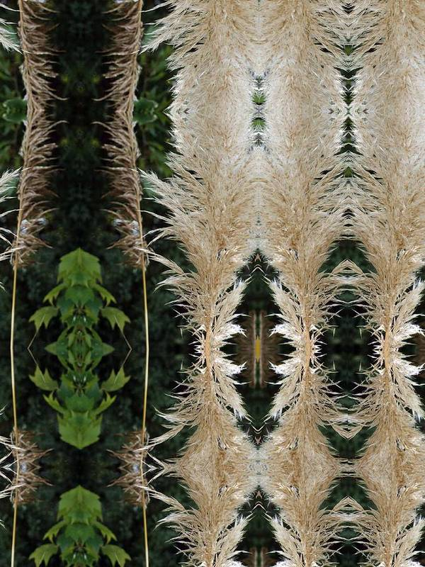 Kaleidoscope Poster featuring the photograph Pompas Grass by Keri Renee