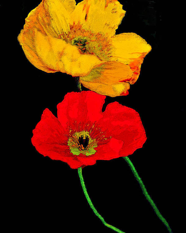 Poppies Poster featuring the photograph Poppies On Black by Lynn Andrews