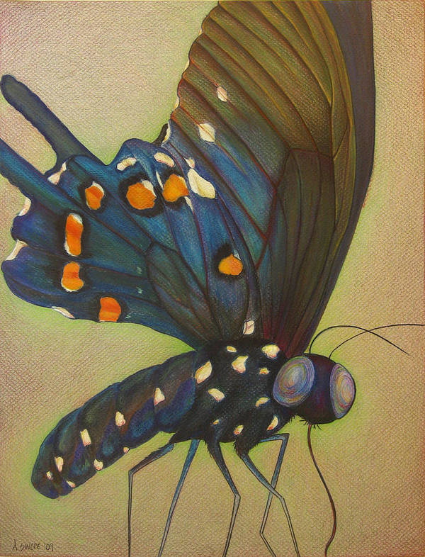 Butterfly Poster featuring the painting Portrait Of A Butterfly by Andrea Swope