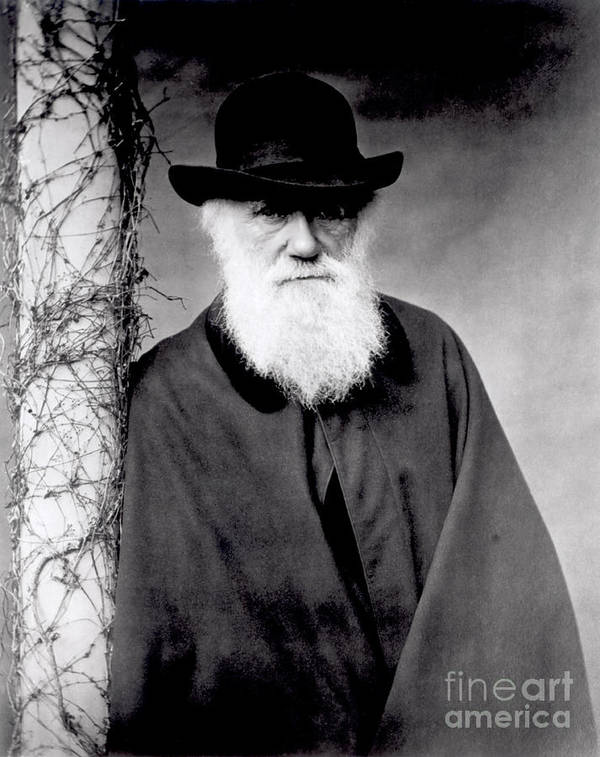 Portrait Of Charles Darwin (1809-82) 1881 (b/w Photo) By Julia Margaret Cameron (1815-79) Poster featuring the photograph Portrait Of Charles Darwin by Julia Margaret Cameron