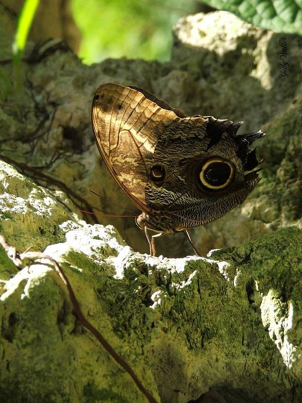 Butterfly Poster featuring the photograph Posing In The Light by Judy Waller