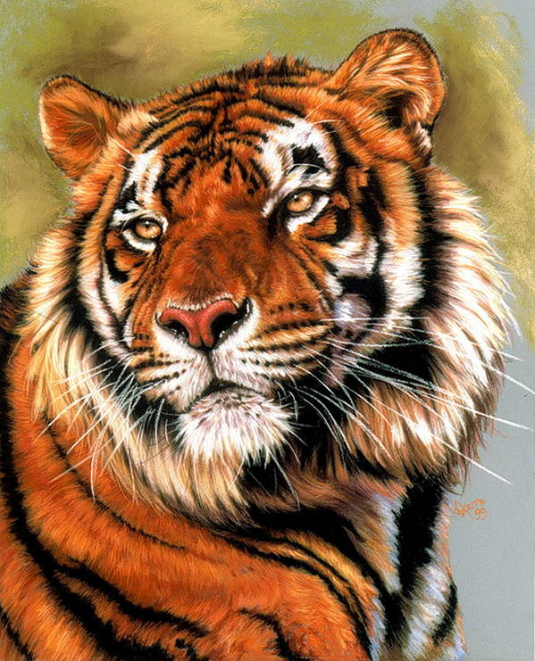 Tiger Poster featuring the pastel Power and Grace by Barbara Keith